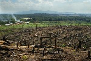 Sumatra (Indonesia), foreste bruciate per far spazio a piantagioni