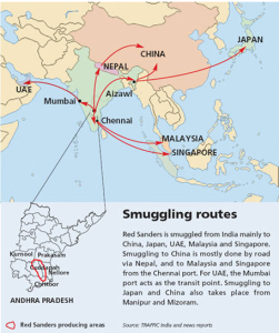 il traffico di sandalo rosso (fonte Traffic)