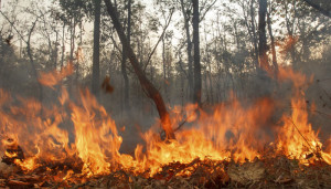 Incendi incontrollati, Kalimantan, Indoneia